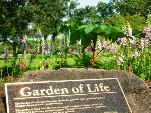 雀巢Garden of Life倡导自然原生力,引领健康生活新主张