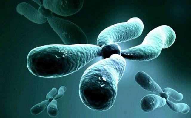 反复种植失败之遗传学因素分析1.jpg